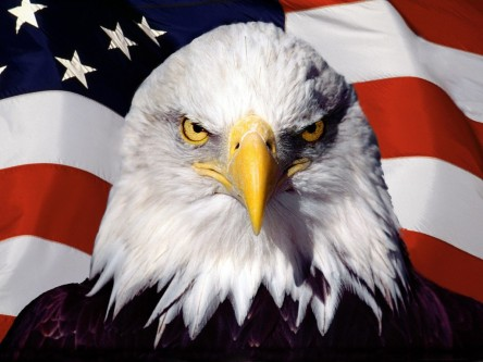 Flag-Bald-Eagle-Wallpapper-HD-1024x768