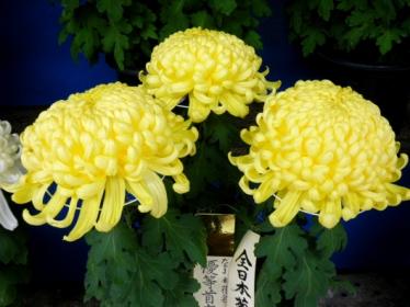 yushima13