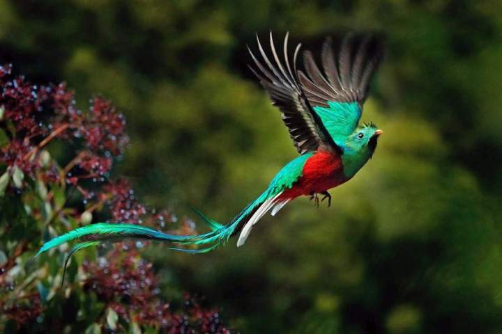 chim-quetzal