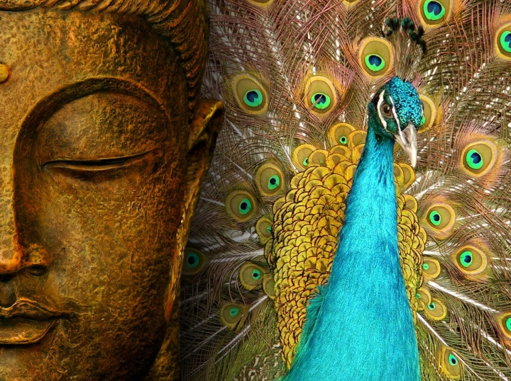 buddha-wallpapers-photos-pictures-peacock.jpg