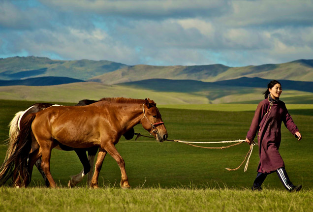 Pictures-of-Mongolian-Horse.jpg